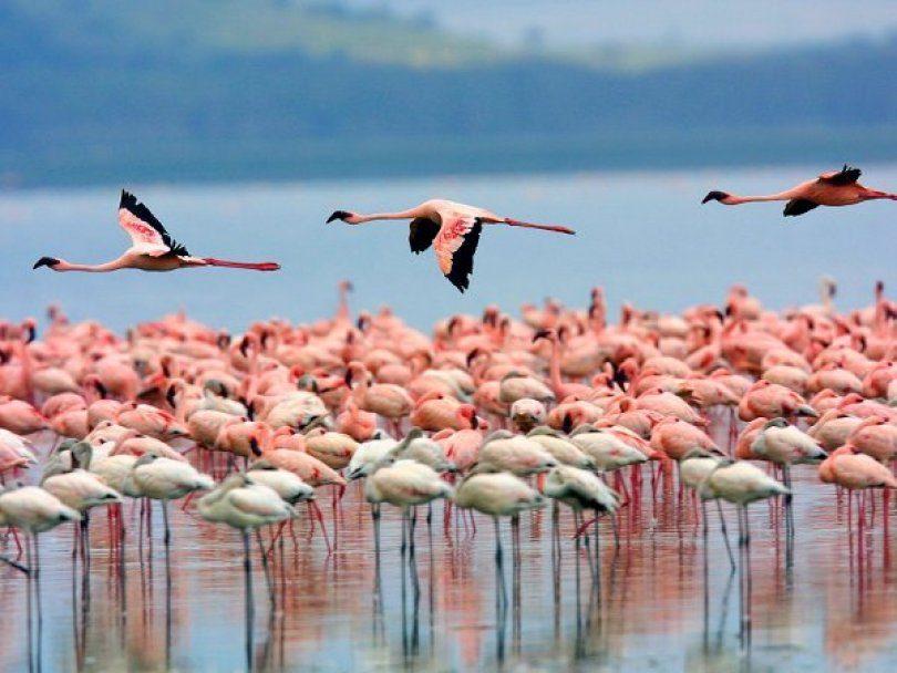 Горячий тур в Кению с сафари